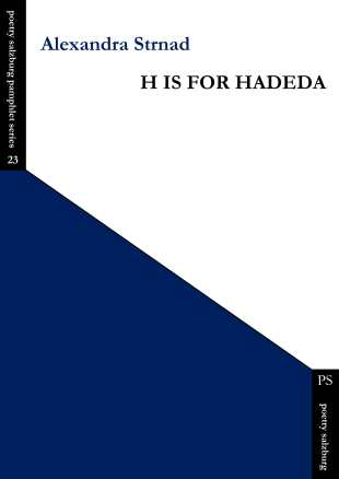 h is for hadeda